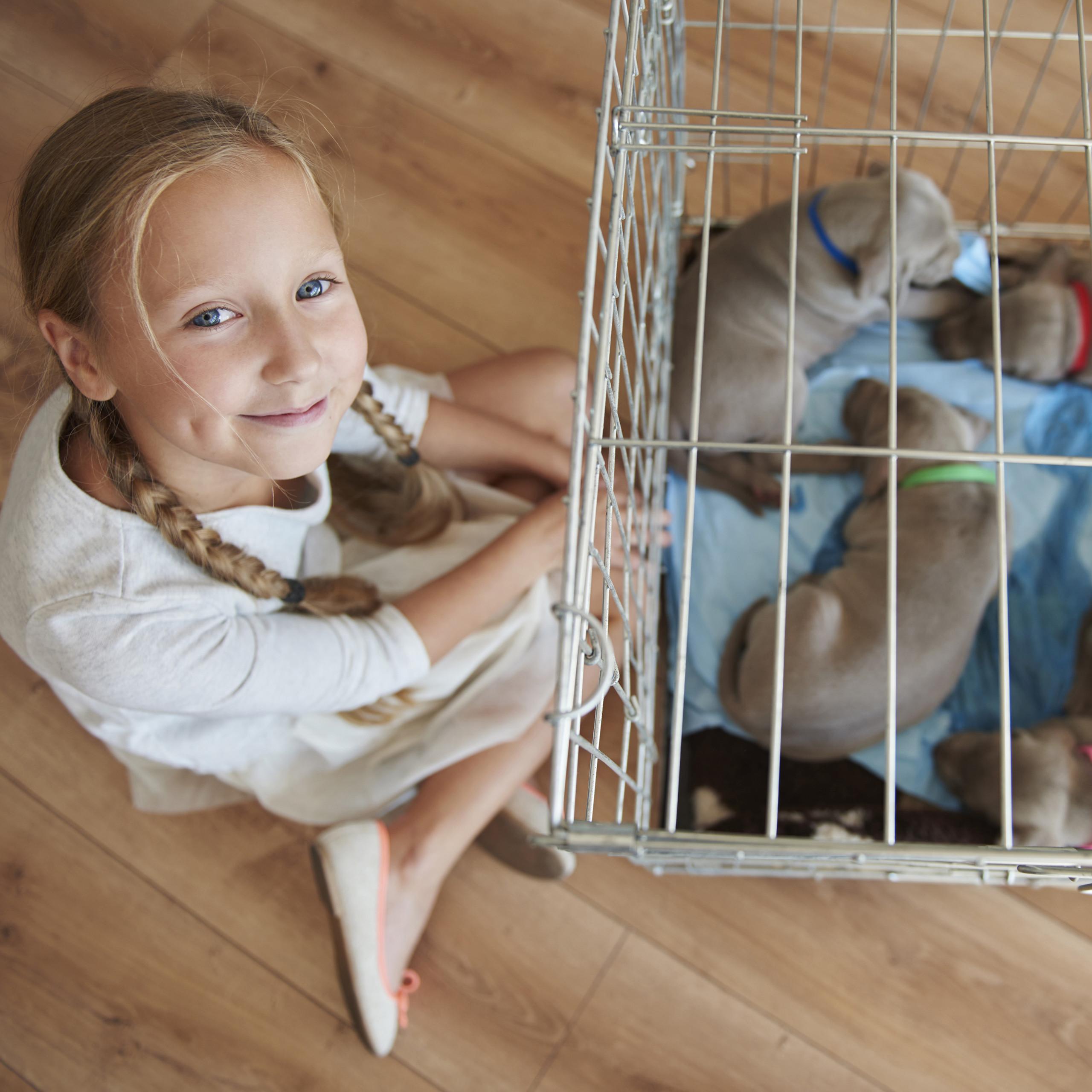 Hondenbench-dubbel-transportbench-transportbox-draadkooi-hond-L-XL-opvouwbaar miniatuur 6