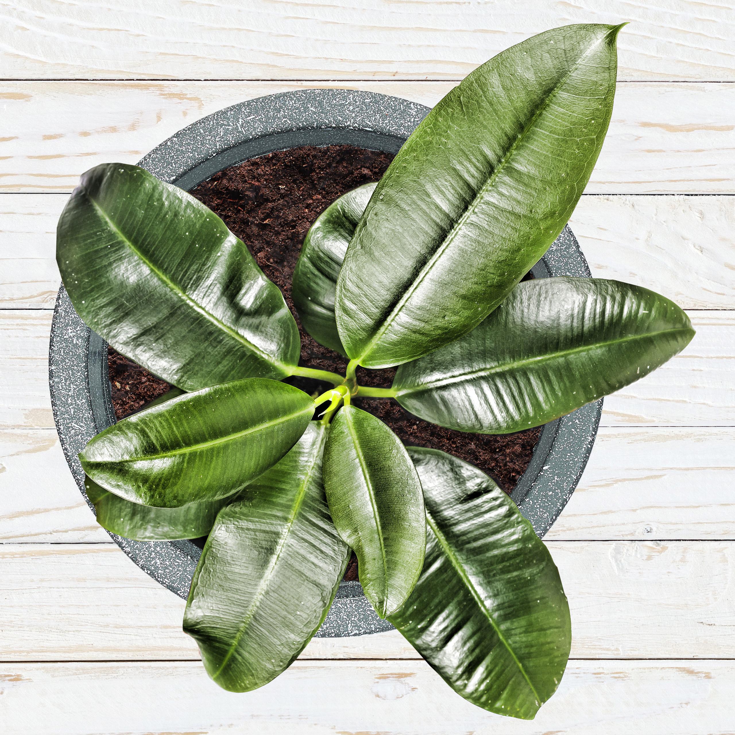 Pots-a-plantes-en-lot-de-2-ronds-Sceaux-a-plantes-Pots-ronds-Plastique-Fleurs miniature 3