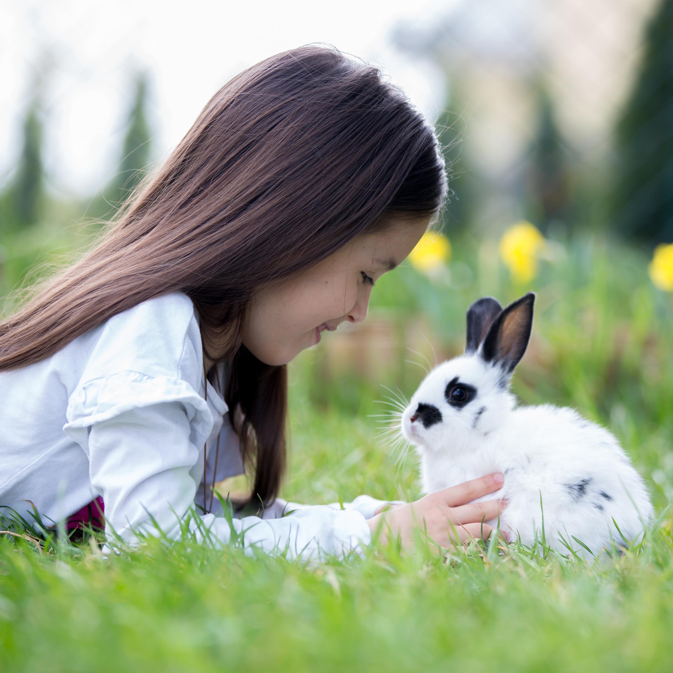 Freilaufgehege-Kaninchen-Huhner-Freigehege-Hasengehege-Huhnerauslauf-220cm-Stahl miniatuur 5