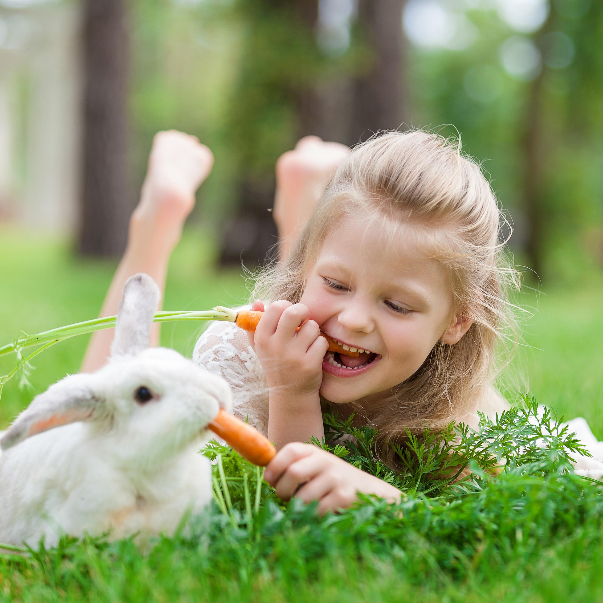 Freilaufgehege-Kaninchen-Huhner-Freigehege-Hasengehege-Huhnerauslauf-220cm-Stahl miniatuur 13
